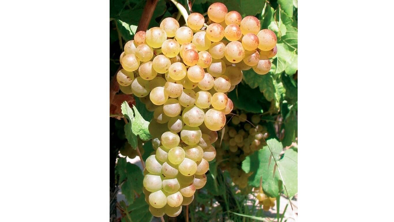 Il vino a Piacenza è una faccenda seria