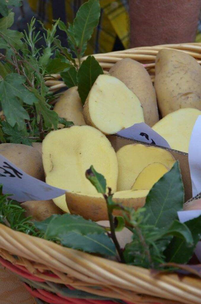 Torta di patate di Mareto